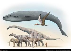 Tamaño relativo de la Ballena Azul con otros animales prehistóricos y actuales