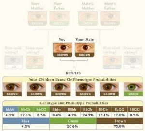 Eye Calculator