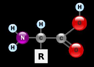 Aminoácido. Las pelotitas rojas representan el grupo acido mientras la pelotita morada es el grupo amino.