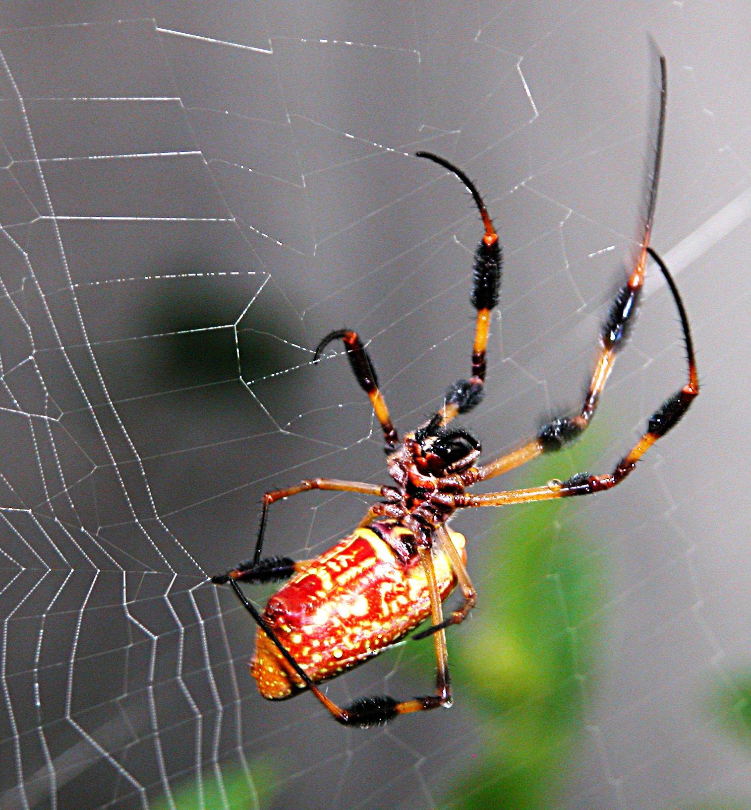arañas, horribles y hermosas a la vez [HD]