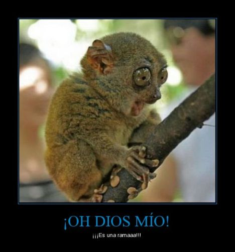 CR_280143_oh_dios_mio