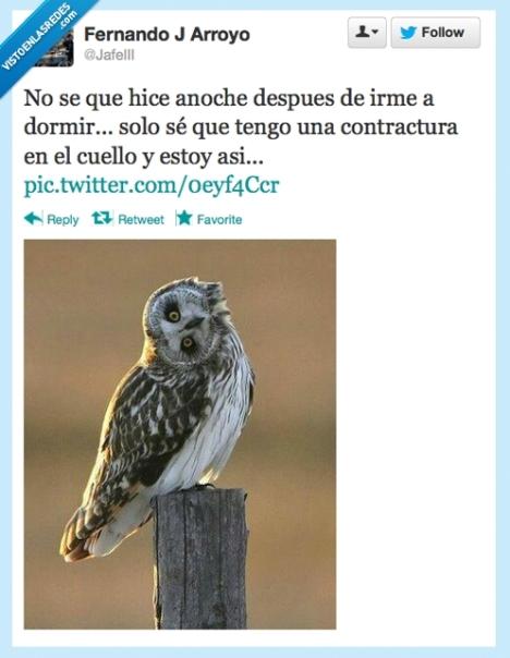 VEF_328587_twitter_el_sindrome_del_buho_por_jafeiii